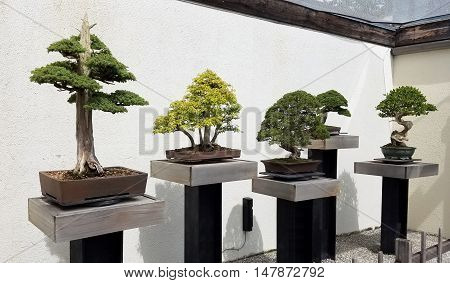 Bonsai and Penjing exhibit with miniature trees in trays