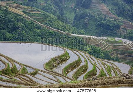The terrace fields scenery in spring, Guilin, China