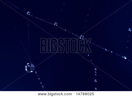 spider web with drops on dark background