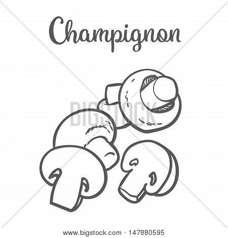Set of champignon edible mushrooms sketch style vector illustration isolated on white background. Collection of edible mushrooms - button mushroom