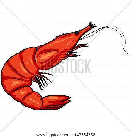 Vector Cartoon Shrimp