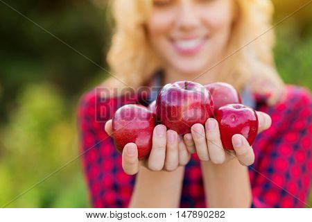 Unrecognizable young blond woman in checked red shirt harvesting apples, holding them in her hands