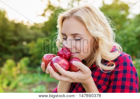 Beautiful young blond woman in checked red shirt harvesting apples, holding them in her hands, smelling them