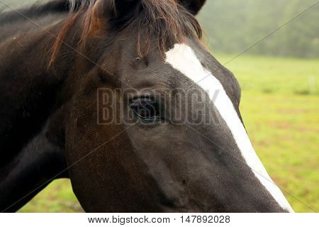 Close-up of horse head with a clearly visible eye a piece of mane and szyi.Close horizontal view