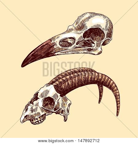 Vector sketch illustration  animal skulls. Drawing by hand. Boho style. Use for posters, postcards, print for t-shirt, tattoo.