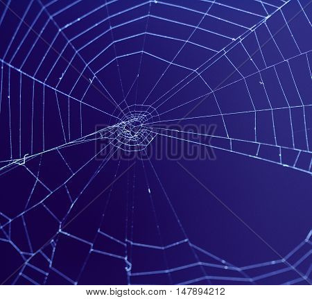 picture of a Spider web. animals theme