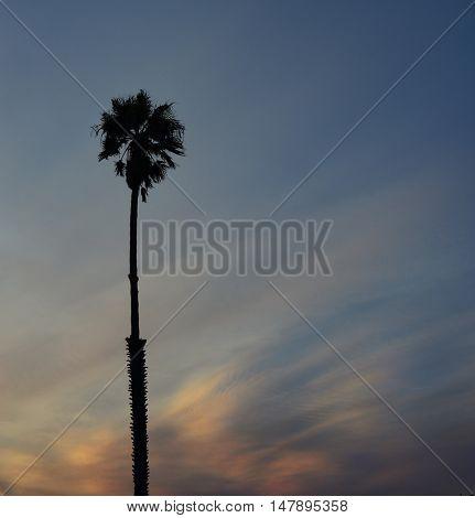 Beautiful Single Palm tree at Sunset