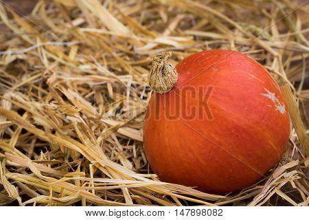 Closeup of Hokkaido Pumpkin on wooden background
