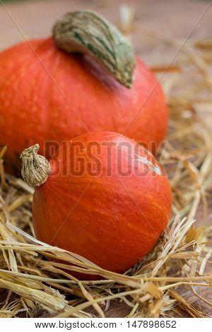 Detail of hokkaido pumpkins decoration - still life