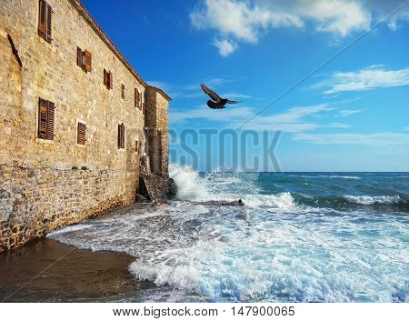 The gull is flying over the beach withold building in Montenegro.