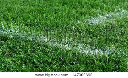 picture of a white line of soccer field. sport theme