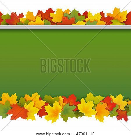 Vector School Blackboard with Maple Leaves isolated on white background