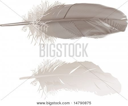 illustration with gray feathers on white background