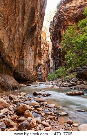 Narrows in Zion National Park Utah USA