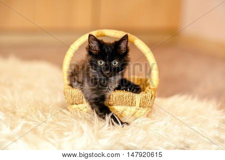 A Little Black Kitten Sitting In The Basket And Looking Forward. Age 1 Month