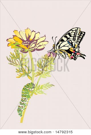 illustration with flower, butterfly and caterpillar