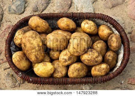 Wicker basket full of freshly dug potatoes standing on stony grounds. Poland september. Close flat horizontal view.