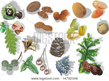 illustration with nuts collection isolated on white background