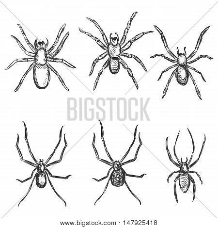 Vector Set Of Sketch Spiders
