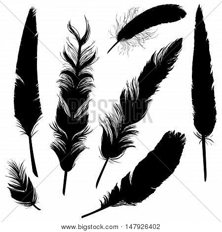 Vector Set Of Plumage Silhouettes