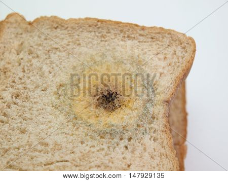 Close up Mold on bread. (on a white background)