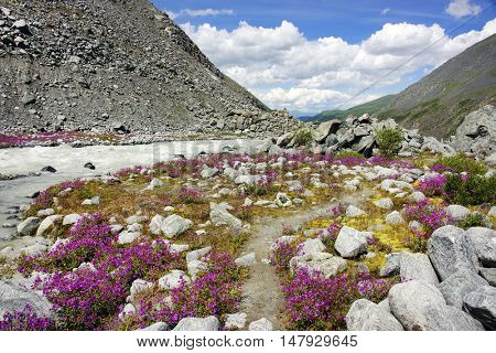 Akkem Valley in Altai Mountains Natural Park - UNESCO Natural Monument, Siberia, Russian Federation