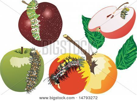 illustration with caterpillars and apples isolated on white background