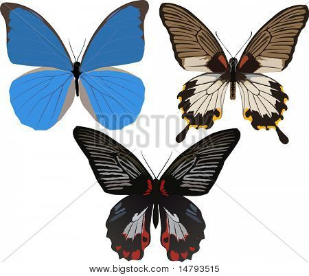 illustration with three tropical butterflies isolated on white background
