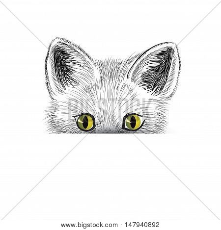Cat. Kitten face sketch. Hiding cat isolated. Cat head icon looking at camera. Puppy cat illustration