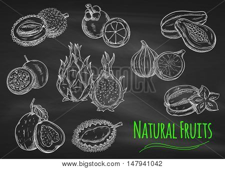 Chalk sketches of exotic fruits on blackboard with star fruit, papaya, guava, passion fruit, dragon fruit, lychee, mangosteen, fig and durian fruits