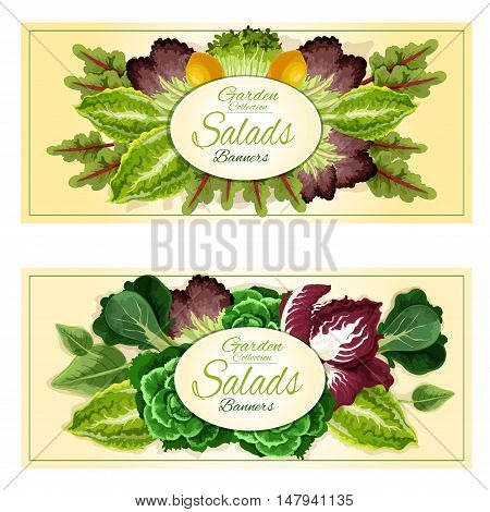 Fresh organic leaf vegetables and salad greens banners set with cabbage, lettuce, spinach, watercress, radicchio, bok choy, arugula, purple kale, iceberg lettuce and chard