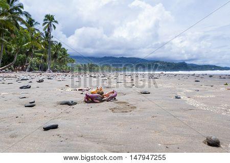 Tropical Crab On The Beach