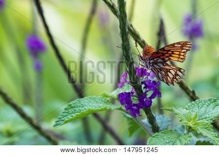 Orange Butterfly On Porter Weed