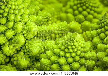 Romanesco broccoli (Brassica oleracea) fractals close-up background
