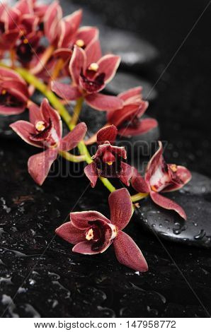 Set of Branch orchid on black stones