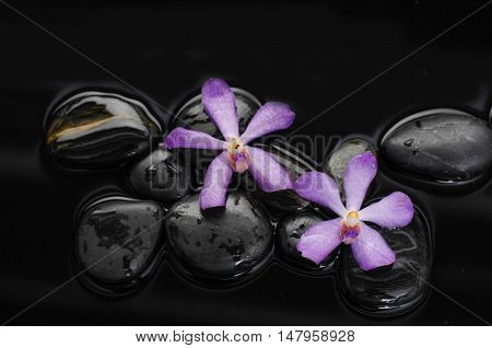 Macro of two orchid on wet black stones
