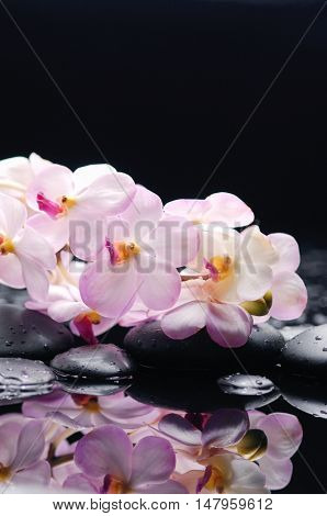 White branch orchid with black stones on wet pebbles