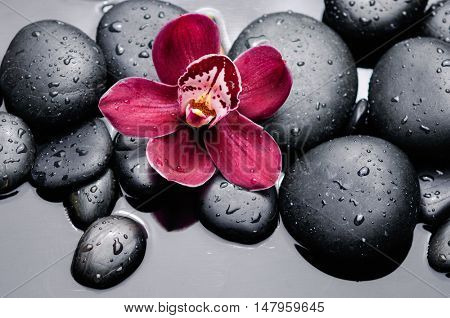 Macro of red orchid on wet black stones