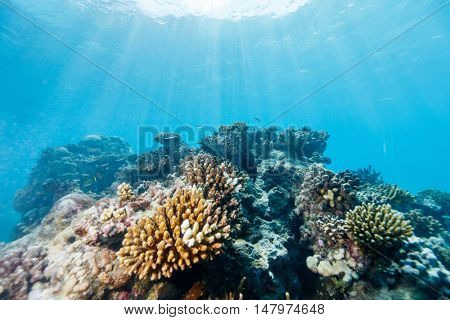 Beautiful colorful coral reef and tropical fish underwater in Mozambique