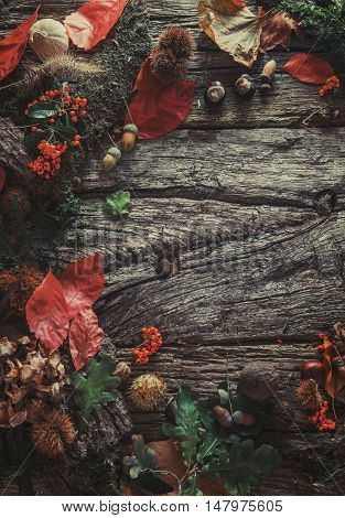 Thanksgiving dinner. Autumn fruit with copyspace. Thanksgiving autumn background