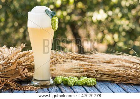 large glass beer kvass malt hops barley ears natural background