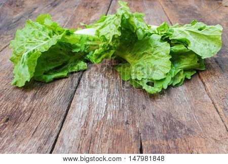 chinese cabbage organic vegetable on  wooden table background. Insect eat hole in the leaf. copy space .