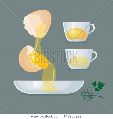 Vector illustration with eggs, yolks, white, eggshells and glass bowl, cups  on grey background.