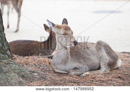 a free range deer