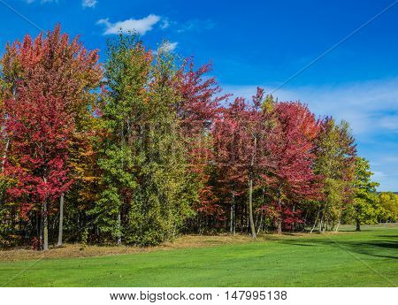 Multi-colored crowns of the trees stand out beautifully against the blue sky. The concept of automobile tourism