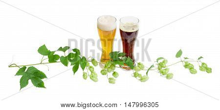 Two beer glasses with lager and dark beer and branch of hops with leaves and strobiles on a light background