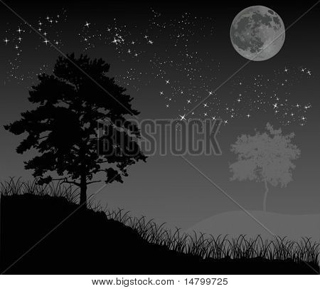 illustration with trees under night sky with stars