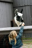 foto of child feeding  - Little girl outdoors feeding llama on spring day