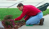 A Man Is Working In The Landscaping Garden, Pruning The Dead Flowers
