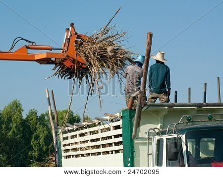 Sugarcane Being Loaded Onto A Truck
